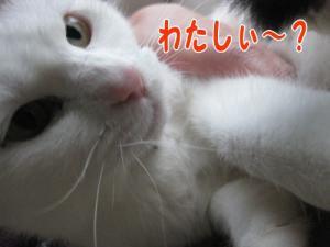 image11171.jpg