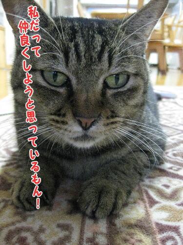 image11254.jpg