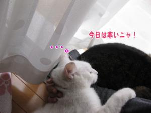 image12105.jpg