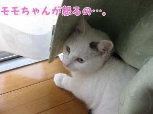 image12163.jpg