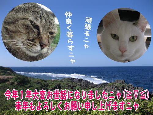 image1231.jpg