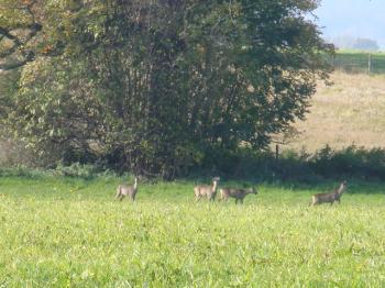 鹿を見ました