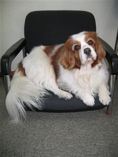 むうの椅子