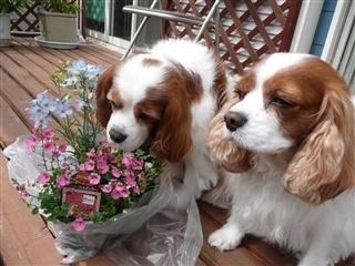 夢民とお花