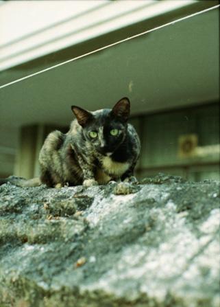 砲台跡の猫