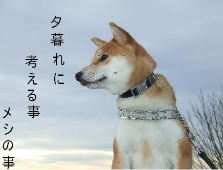 aishu.jpg