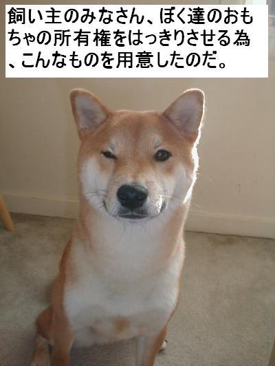 konotabi.jpg