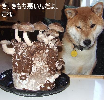 shiitake2.jpg
