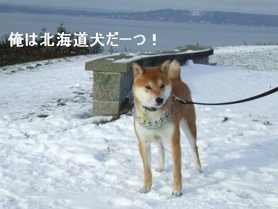 snowsnow1.jpg