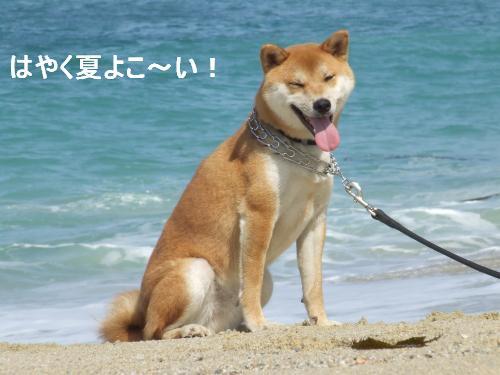 summerhachi.jpg