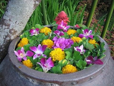 フォーシーズンチェンマイの水鉢