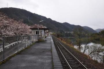 潮駅の桜(4)