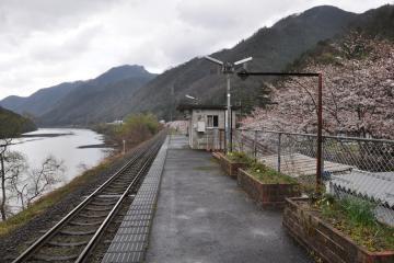 潮駅の桜(5)