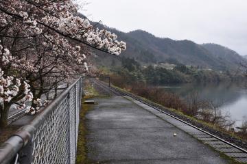 潮駅の桜(6)