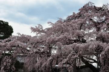 醍醐寺(12)