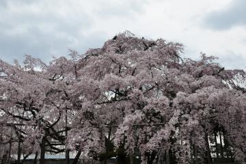 醍醐寺(13)
