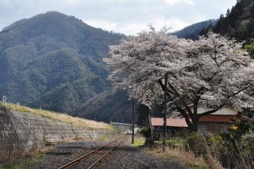 石見簗瀬駅(15)