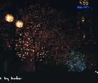 初雪2009-1