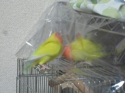 姉妹喧嘩3