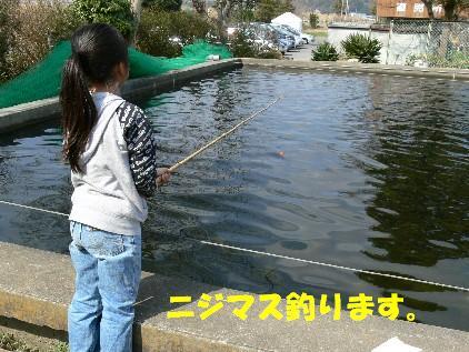 ニジマス釣ります