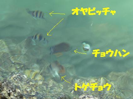 海水魚発見!
