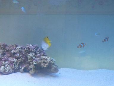 海水魚水槽2