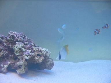 海水魚水槽3