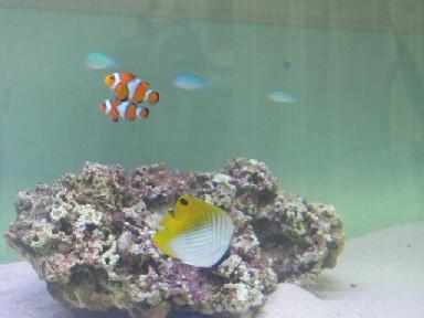 海水魚水槽 ランプ白