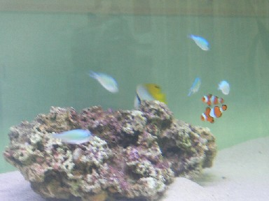 海水魚水槽 ランプ白2