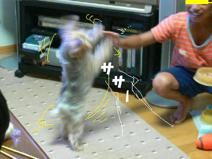 ハイタッチ!