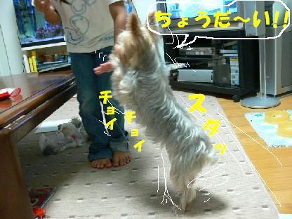 ちょうだ~い!