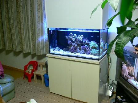 水槽セット完成!!