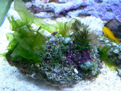 海藻に覆われて