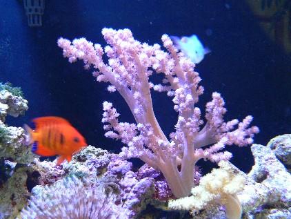 サンゴのうんちく 千葉ワンだー...
