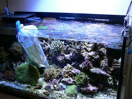 枝状サンゴ