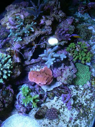 小さいサンゴたち