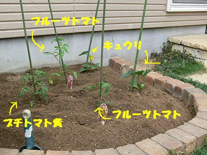半畳菜園1