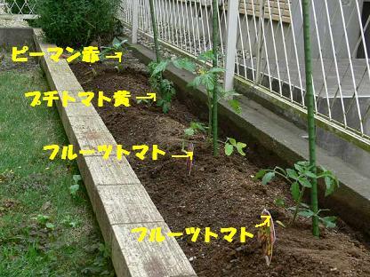 半畳菜園2