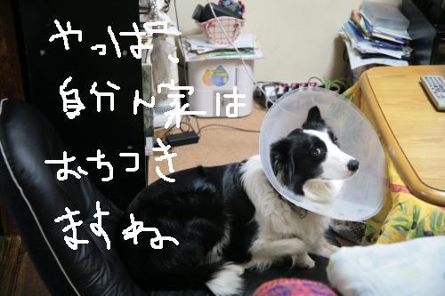 fer+otituku_convert_20081113201903.jpg