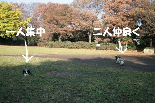fer+syutyu_convert_20081126101833.jpg