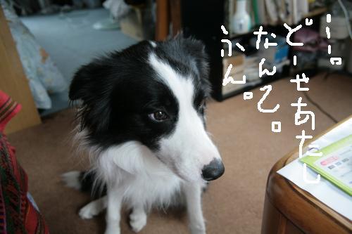 ferk_convert_20081122194955.jpg