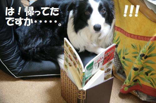 ha!!!!_convert_20081206025100.jpg