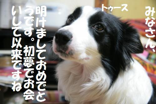 hatuyume_convert_20090105162603.jpg