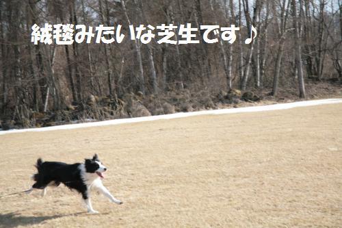 hya_convert_20090322222948.jpg
