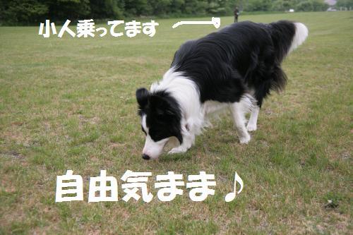 kobito_convert_20090627195721.jpg