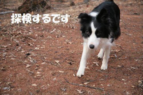 koinu_convert_20090309224137.jpg