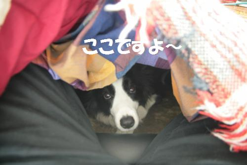kotatuken_convert_20090313225728.jpg