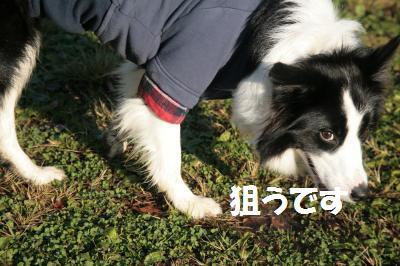 neru_convert_20081126103807.jpg