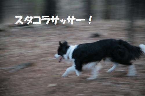 singen2_convert_20090415214229.jpg