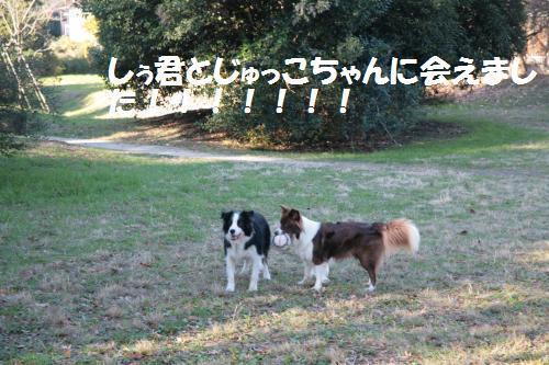 sj_convert_20081201110804.jpg